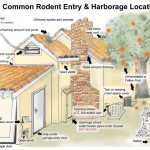 Rodent exterminator identies entry points