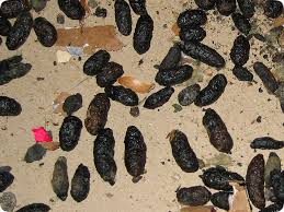 Rat Droppings Pictures