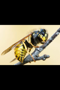 Wasp Images