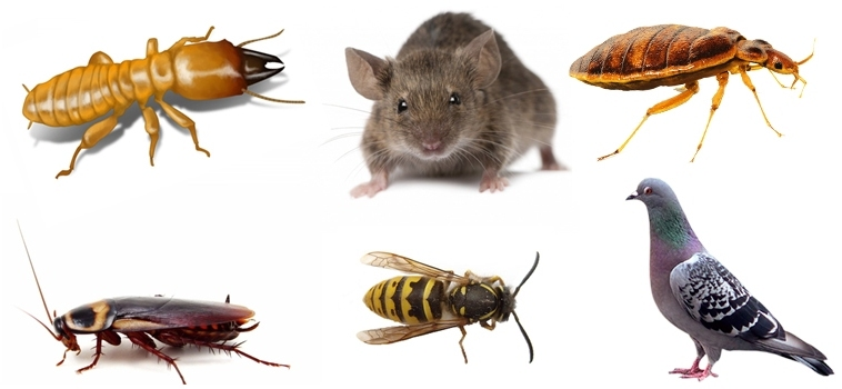 pest-and-rodent-control