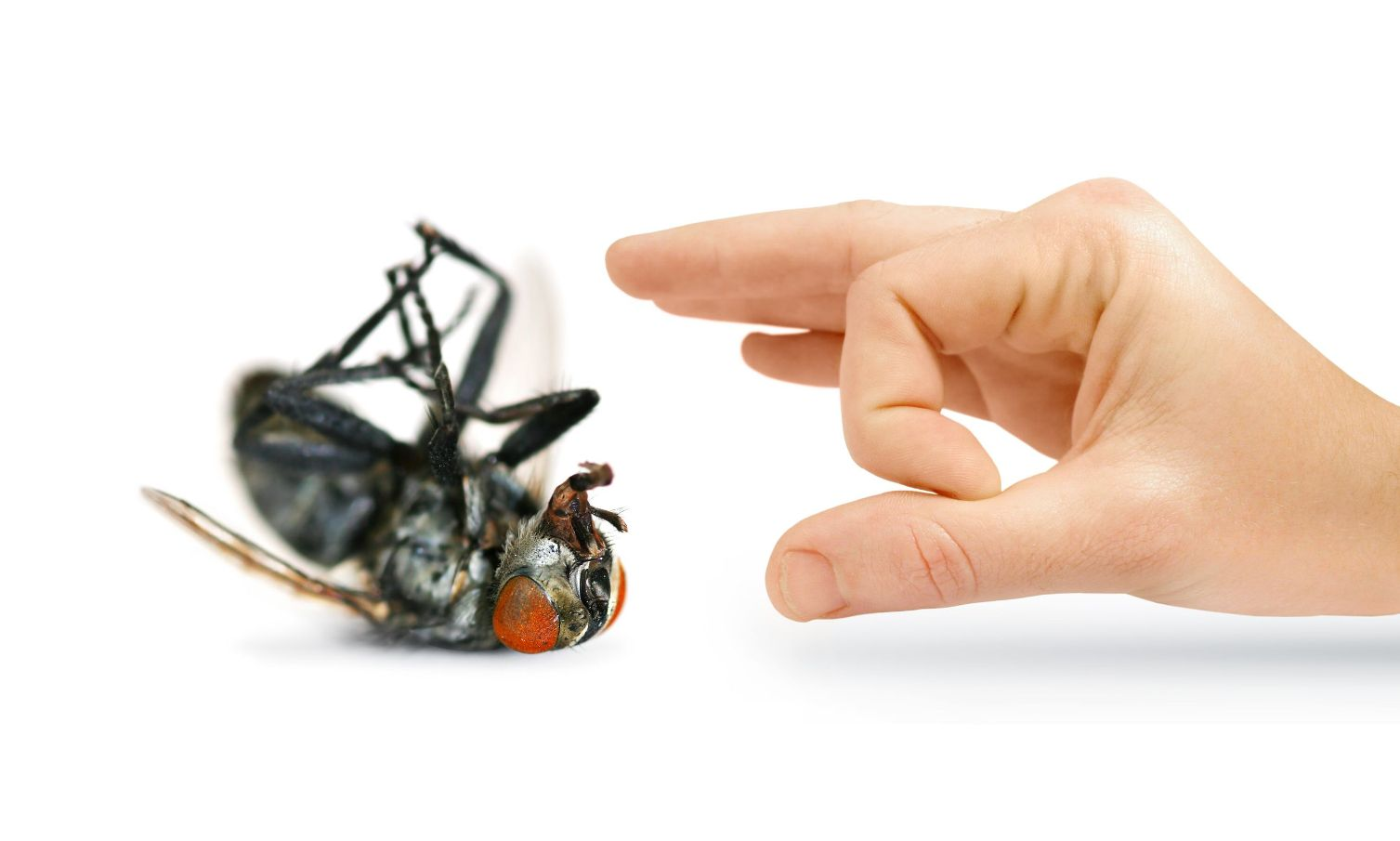 signs that call for pest control