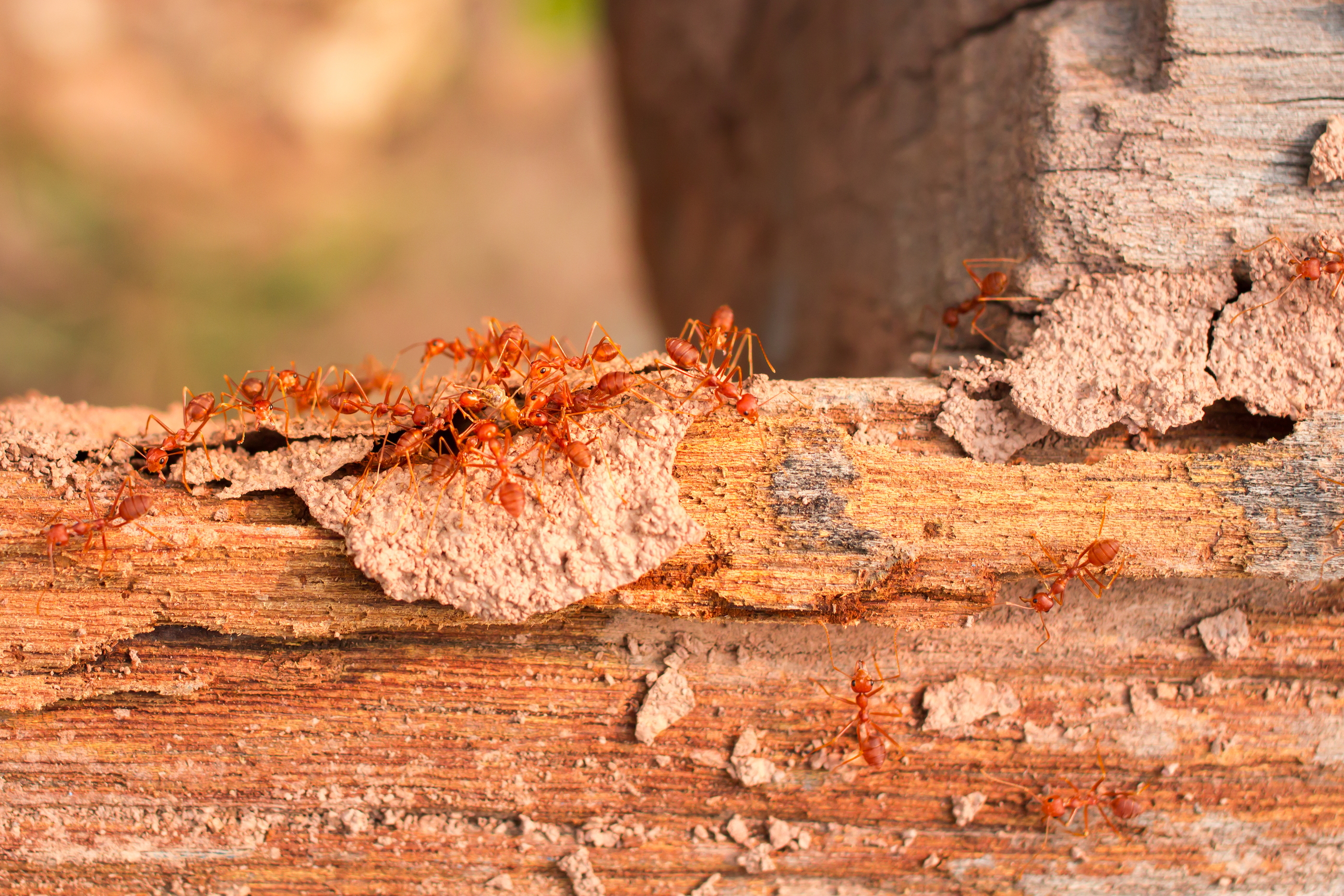 Termite Damage Repair Canyon Lake CA