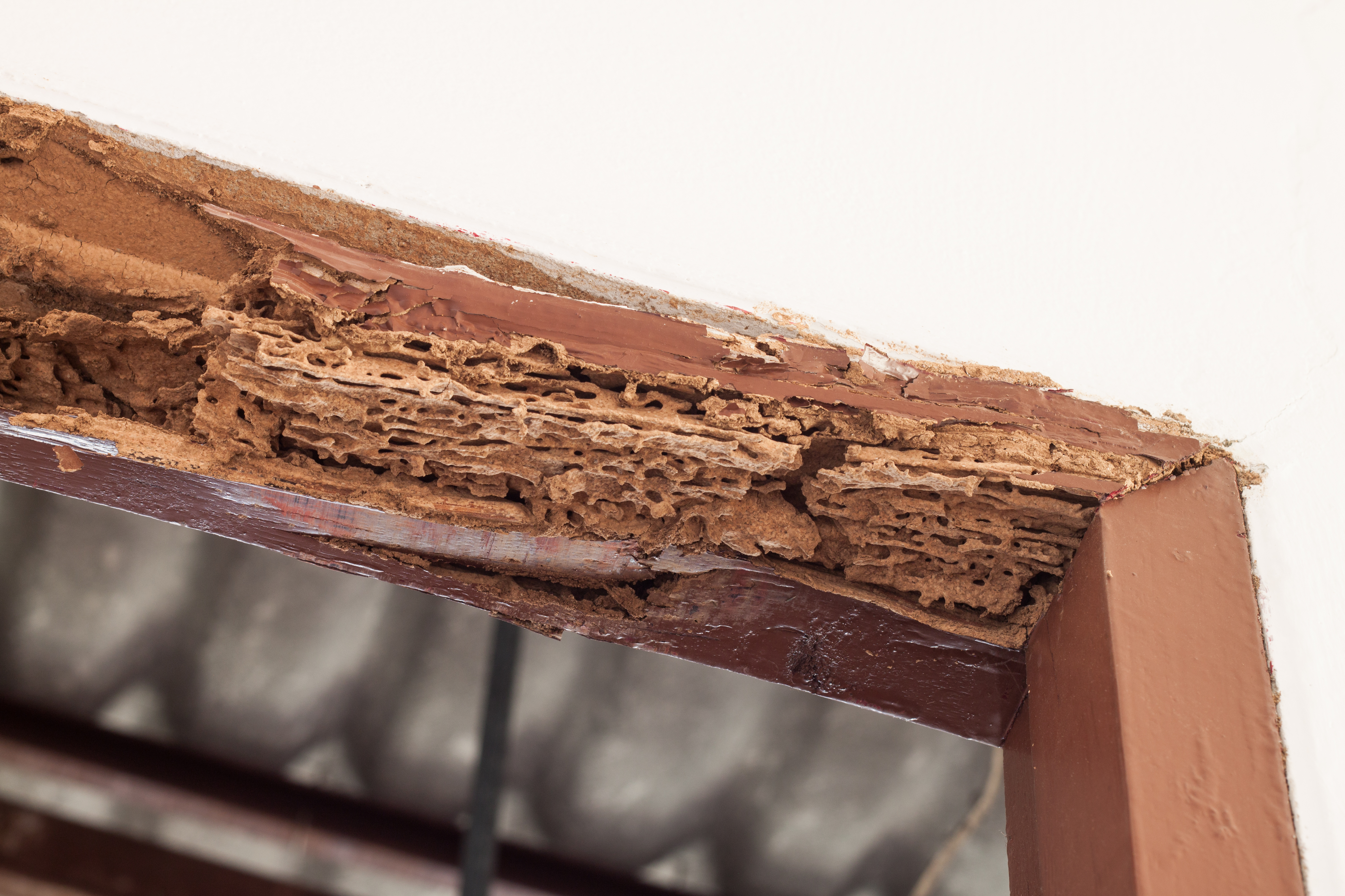 Termite Damage Repair Beverly Hills CA
