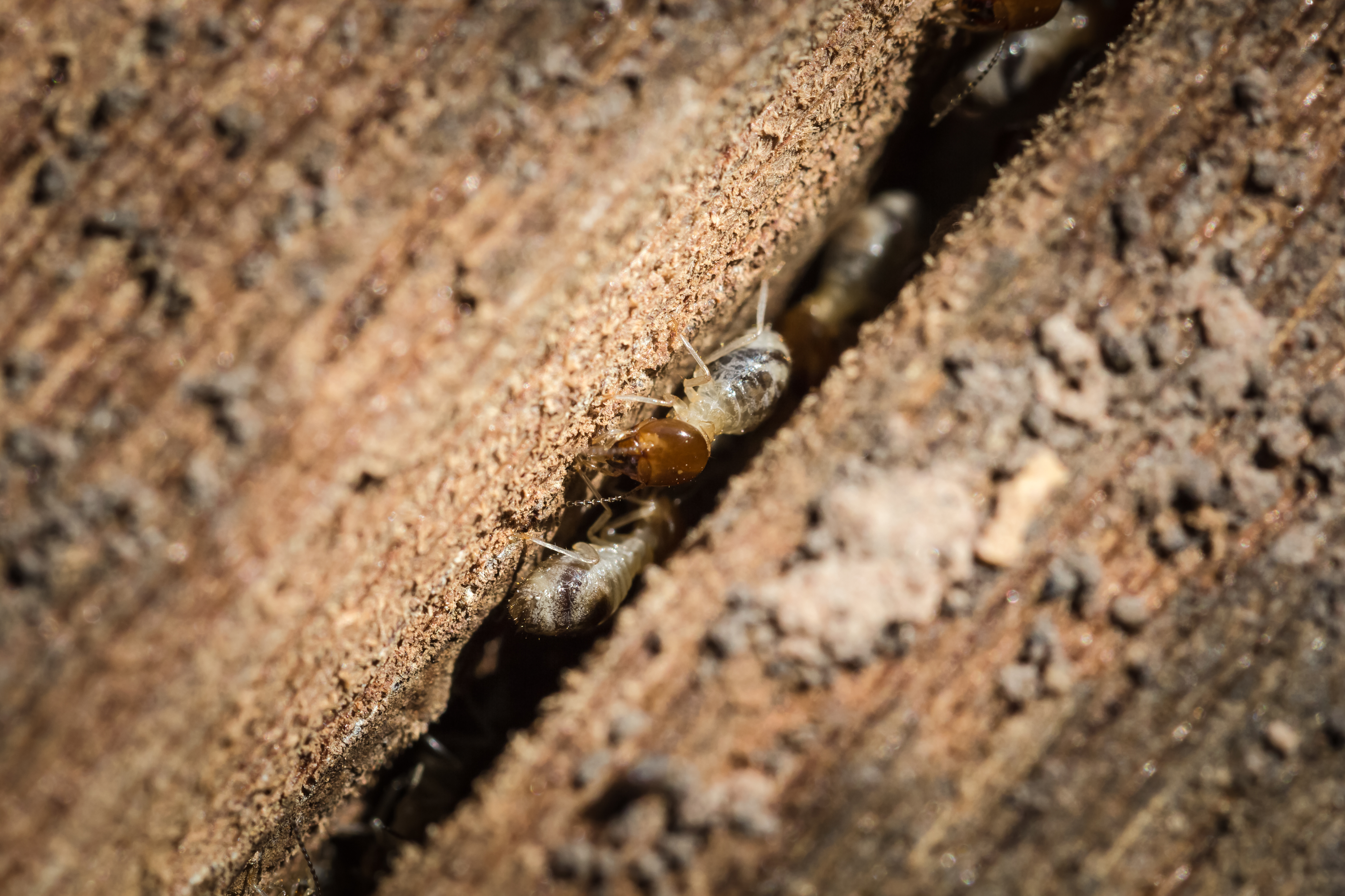 Free Termite Inspection Long Beach CA