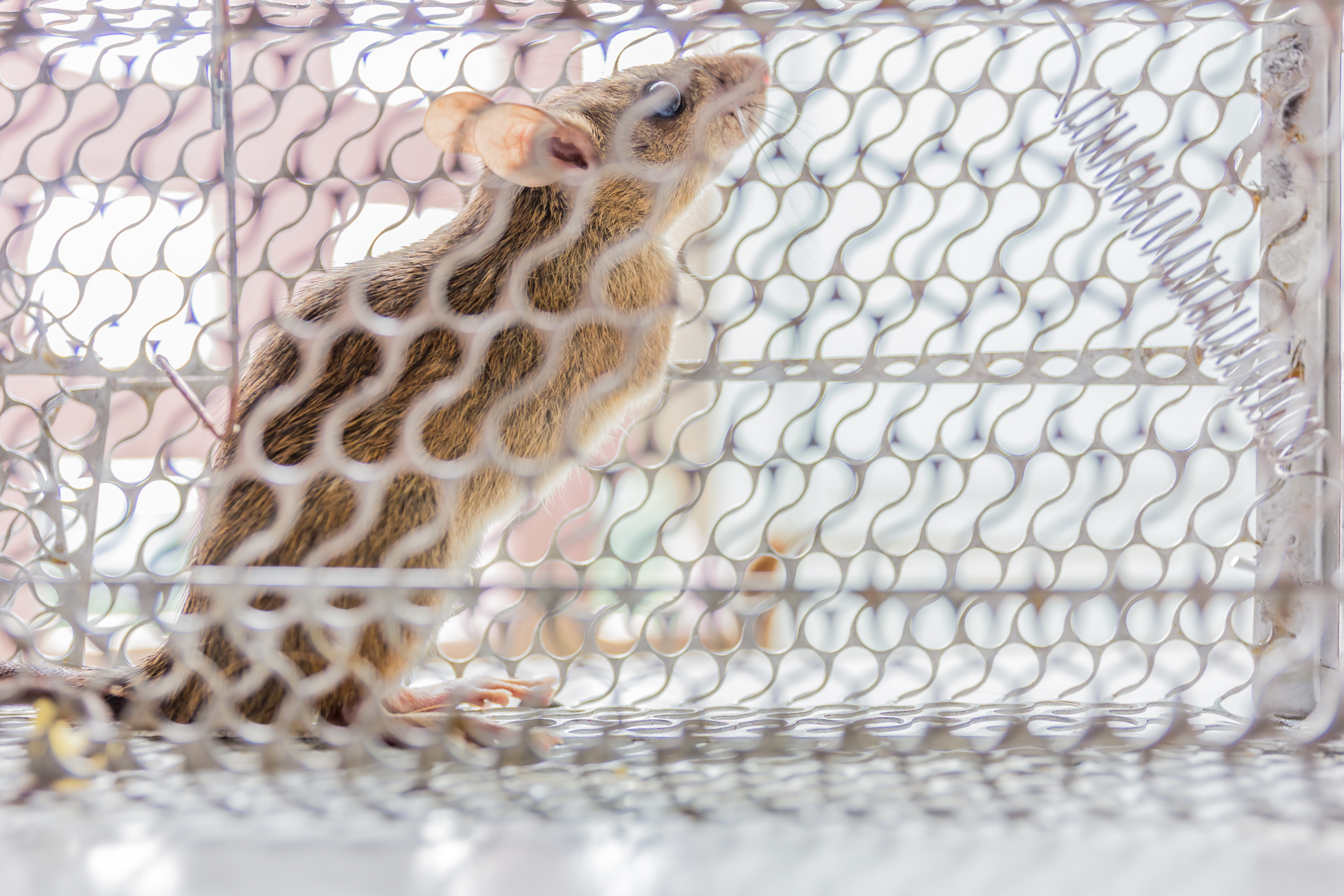 Rodent Control Fountain Valley CA