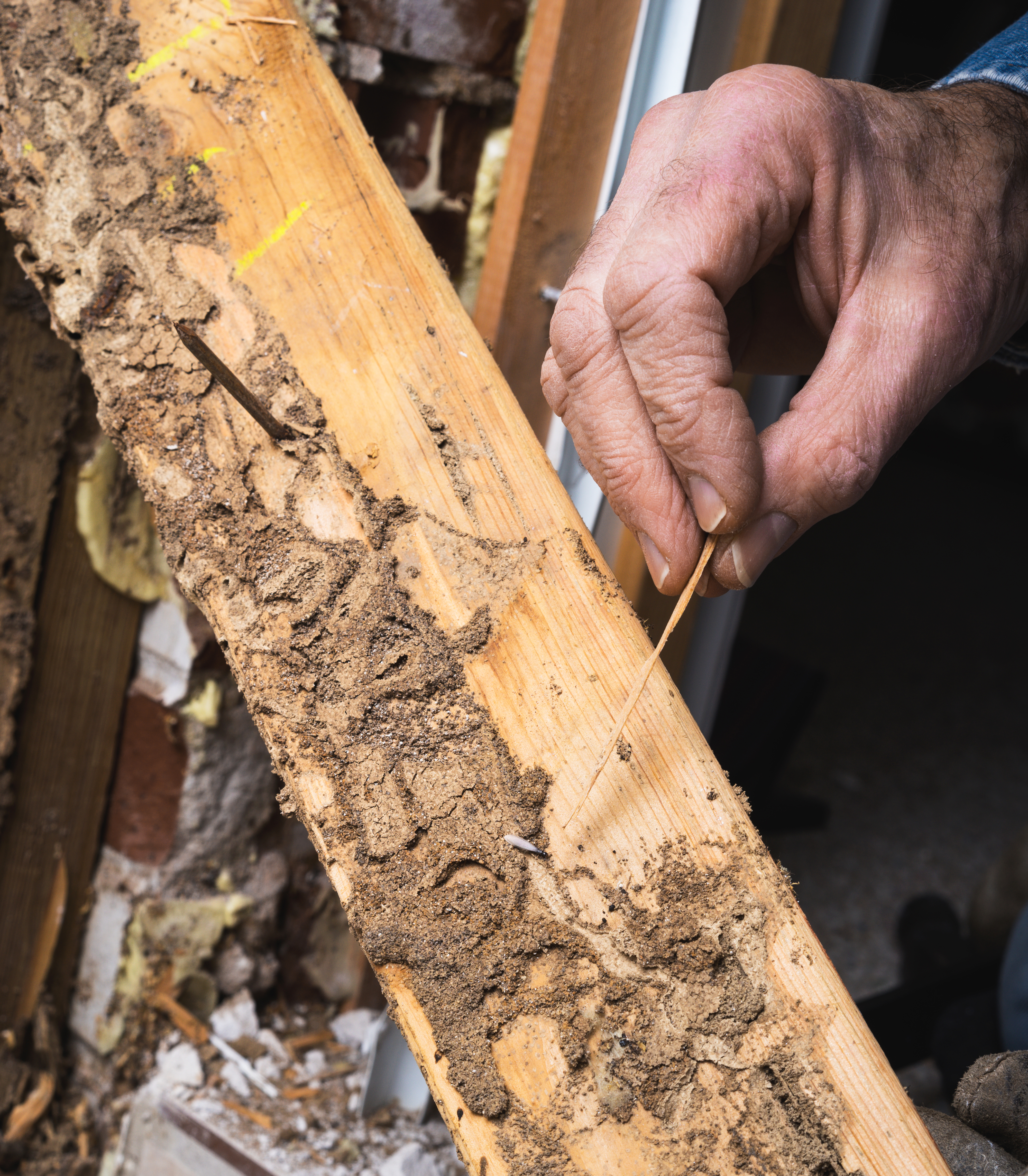 Free Termite Inspection San Diego CA