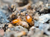 Termite Treatment Los Angeles CA