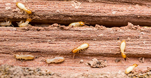 Free Termite Inspection Escondido CA