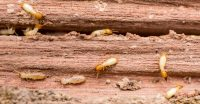 Free Termite Inspection Costa Mesa CA