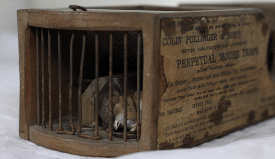 155 Year Old Museum Rat Trap Catches Rats
