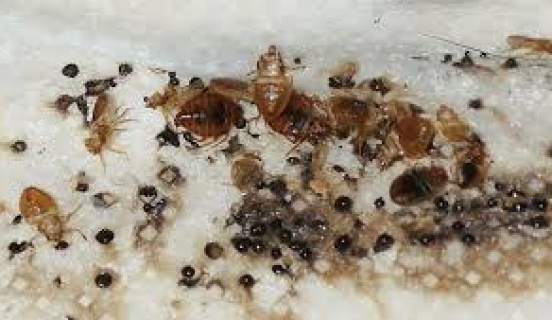 Interior Tips for Pest Management & Termite Control