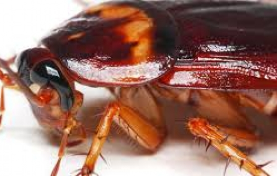Kilter Termite – Your Go-To Source for Pest Control in Orange County