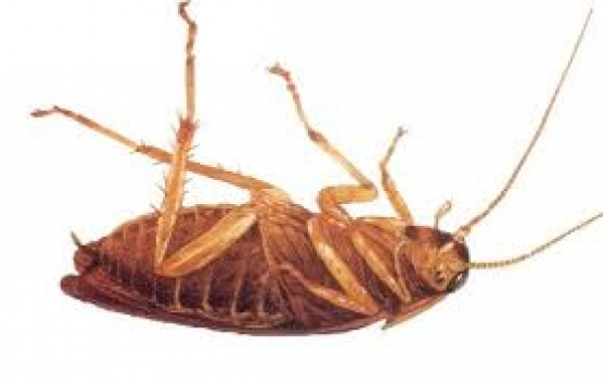 Roaches In Hotels?