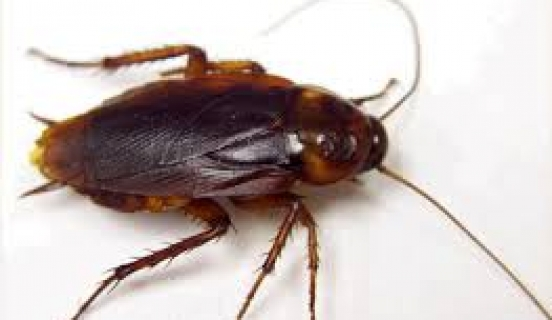 The Gigantic Roach Mystery