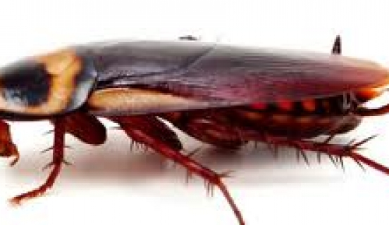 Apartment Roaches Love Air Conditioning