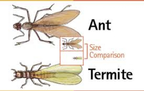 Seeing Flying Ants Those Could Be Termites