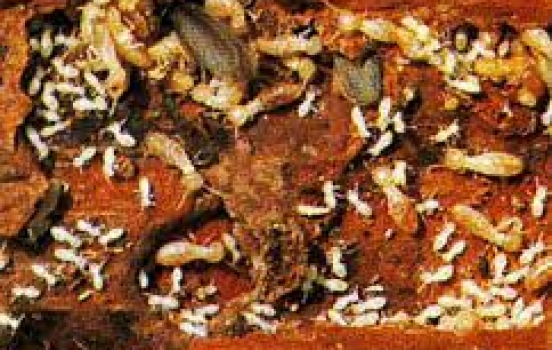 How Much is a Termite Inspection in Orange County?  Potentially Nothing, if You Call Kilter Termite