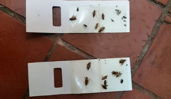 Pest control – Protect your home from drywood termites