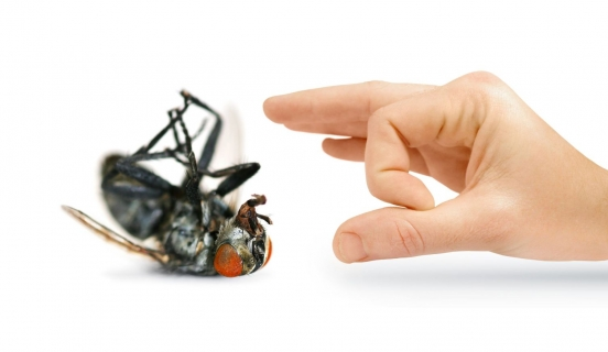 Pest Control: Helpful Ways to Know You're Infested