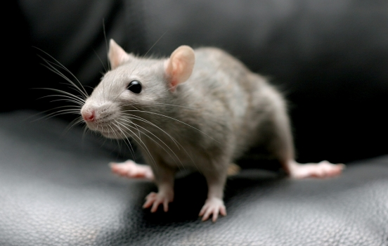 The Most Effective Rodent Control Methods