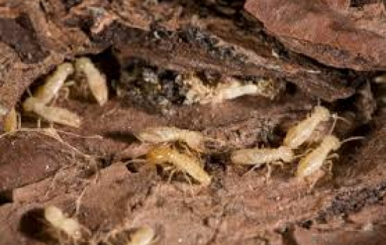 Four Great Reasons to Get a Free Termite Inspection from Kilter Termite