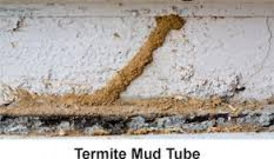 Telling The Difference Between Termites